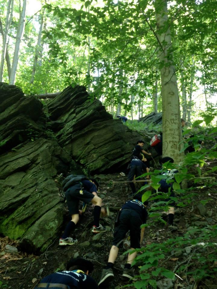 Timber Wolf scramble